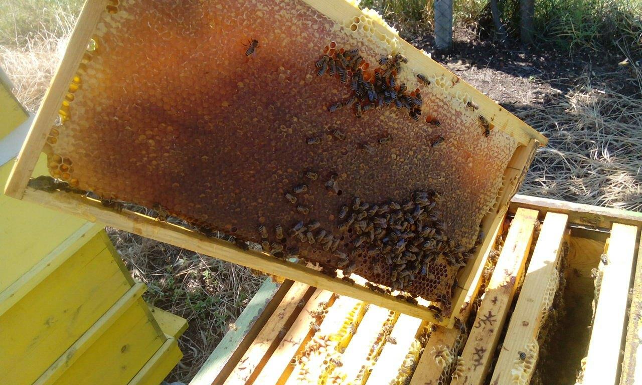 пчелни продукти радихъни
