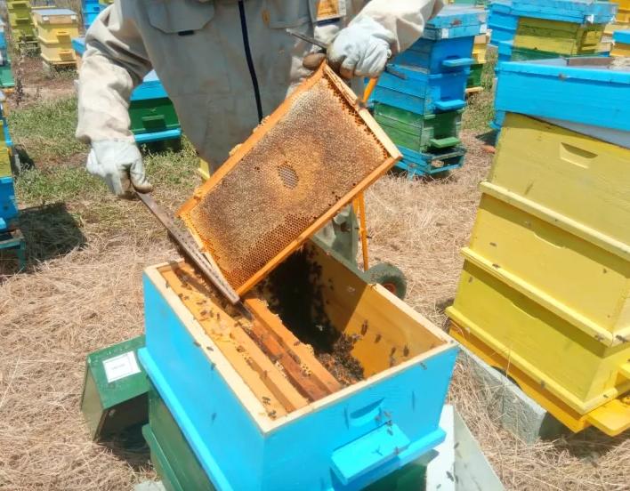 пчелна ферма радихъни