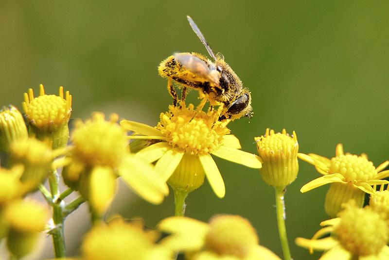 На външен вид пчелният прашец наподобява миниатюрни зрънца, които имат неправилна форма и са покрити с твърда обвивка